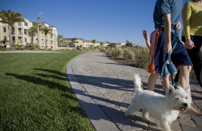 Pet Friendly Suites available at Dolphin Bay Resort