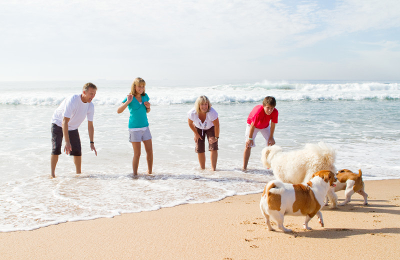 Pets welcome at Holiday Isle Properties, Inc.