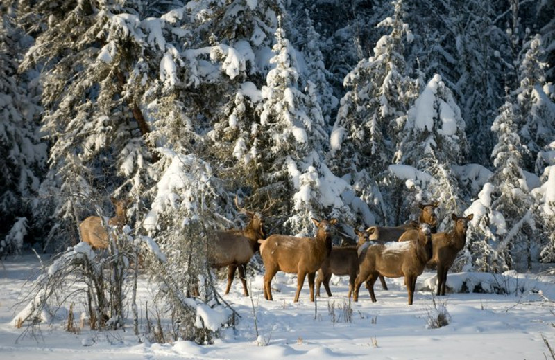 Wild life at Elk Ridge Resort.