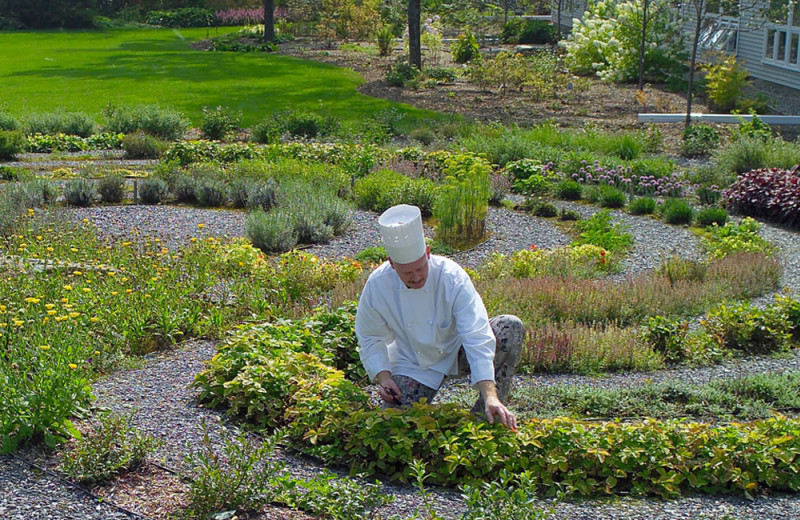 Chef and herb garden at Stoweflake Mountain Resort & Spa.