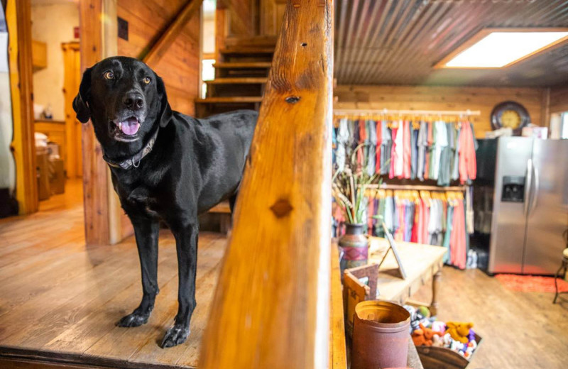 Pets welcome at Log Country Cove.