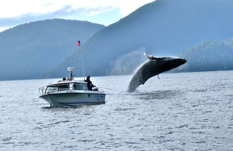Whale watching at The Fireweed Lodge.