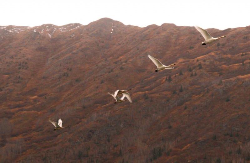 Birds at Kenai River Drifters Lodge.