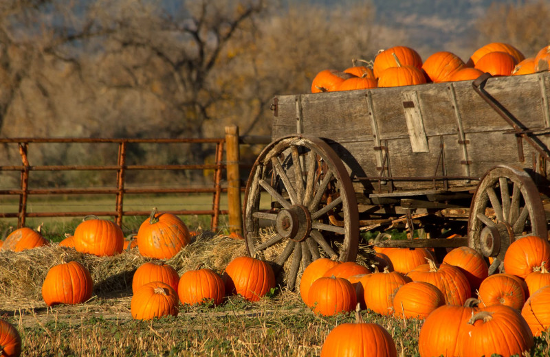 Pumpkins at Burnet County Tourism.