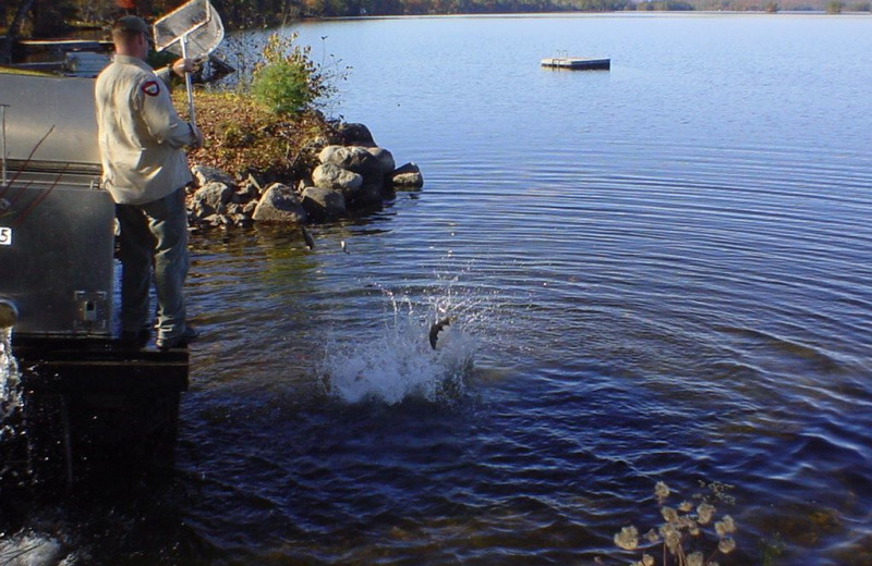 Stocking the lake at Highland Lake Resort.