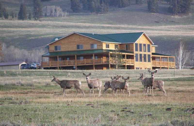 Wildlife at Montana High Country Lodge.