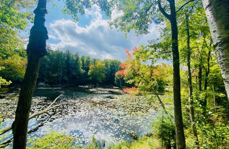 Forest lake at Lakewoods Resort.