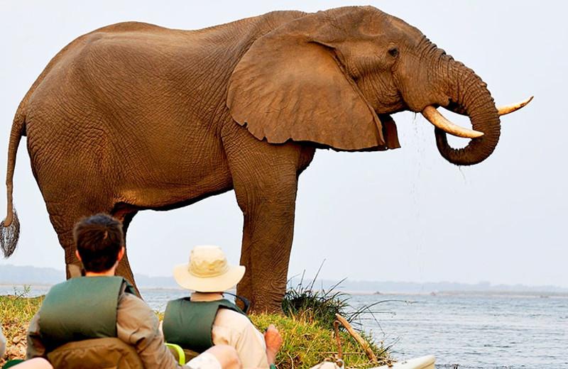 Safari at Chiawa Camp.
