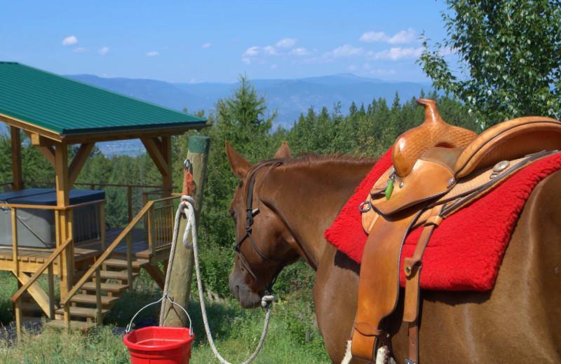 Horse at Myra Canyon.