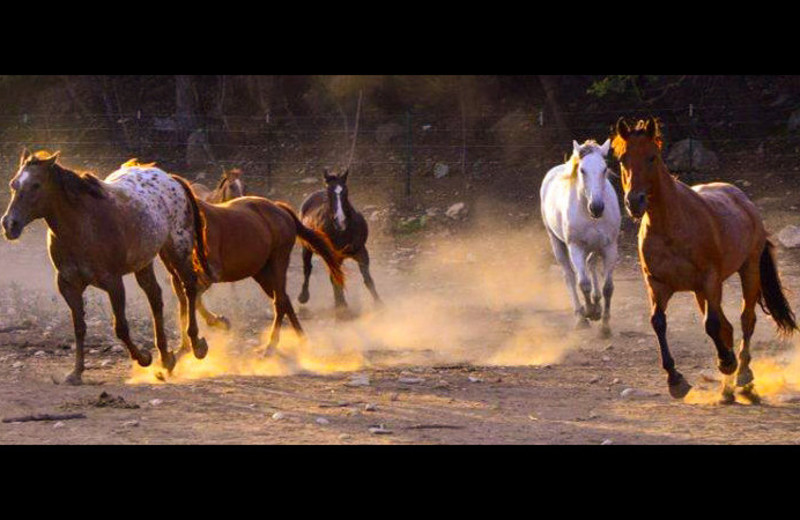 Horses running at Flying L Hill Country Resort & Conference Center.