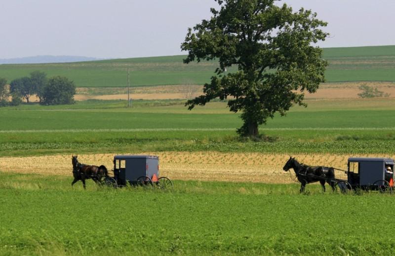 Amish country at Berlin Grande Hotel.