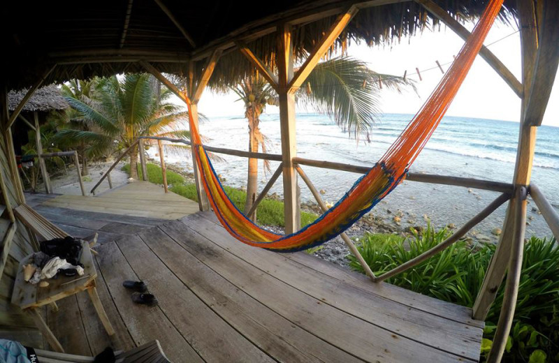 Hammock at Long Caye at Glover's Reef.