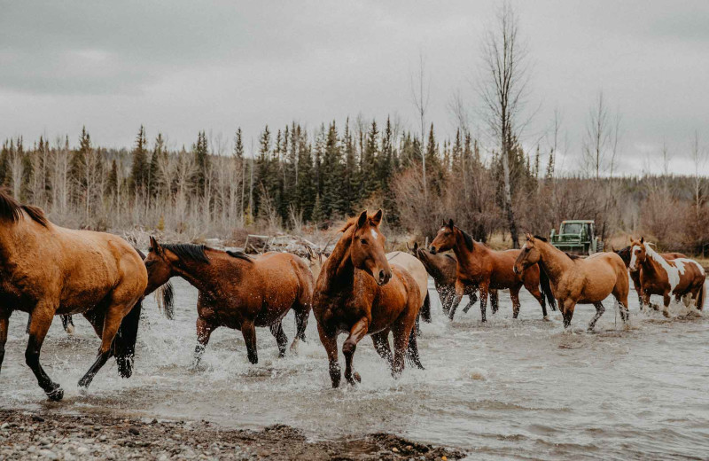 Horses at Big Creek Lodge.