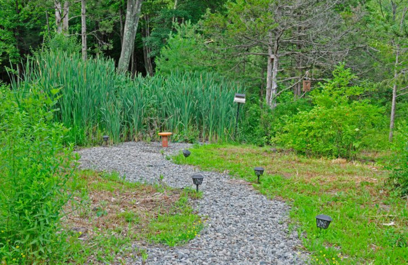 Garden path at Moondance Ridge Bed & Breakfast.