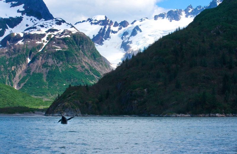 Whale watching at Alaskan Fishing Adventures.