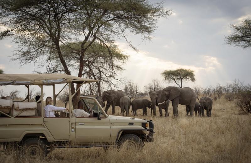 Elephant safari at Kigelia Lodge.