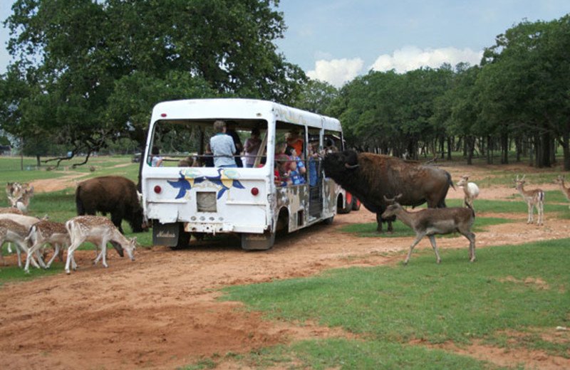 Guided zoo tours at The Exotic Resort Zoo.