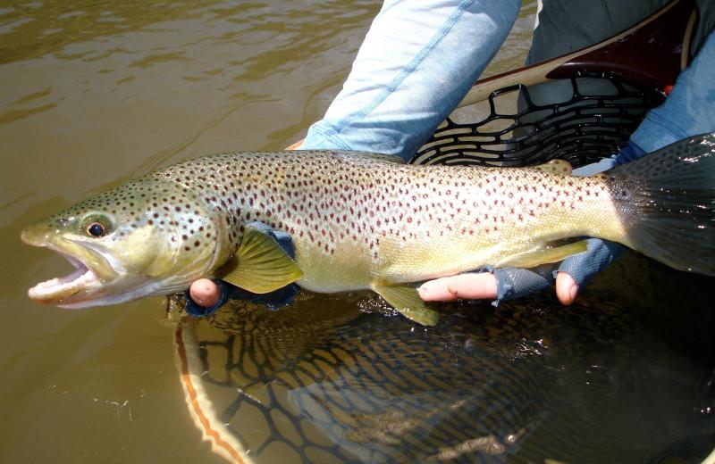Big catch at Clark Fork River Lodge.