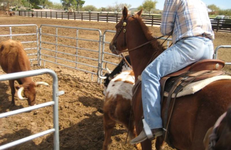 Ranch activities at Rancho De Los Caballeros.