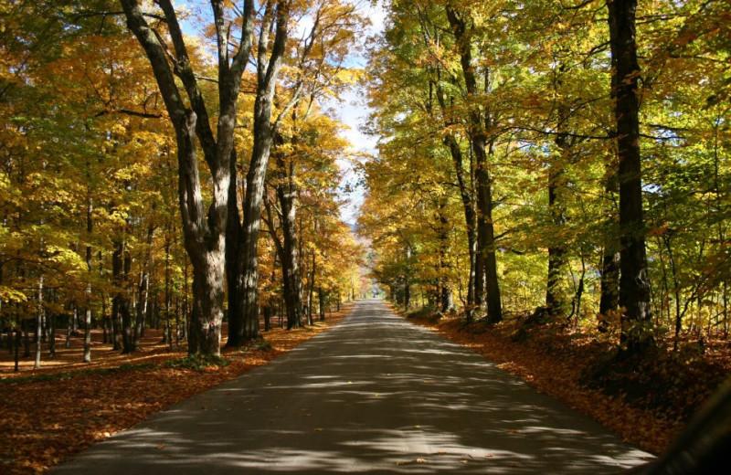 Fall colors at The Arbor Inn.