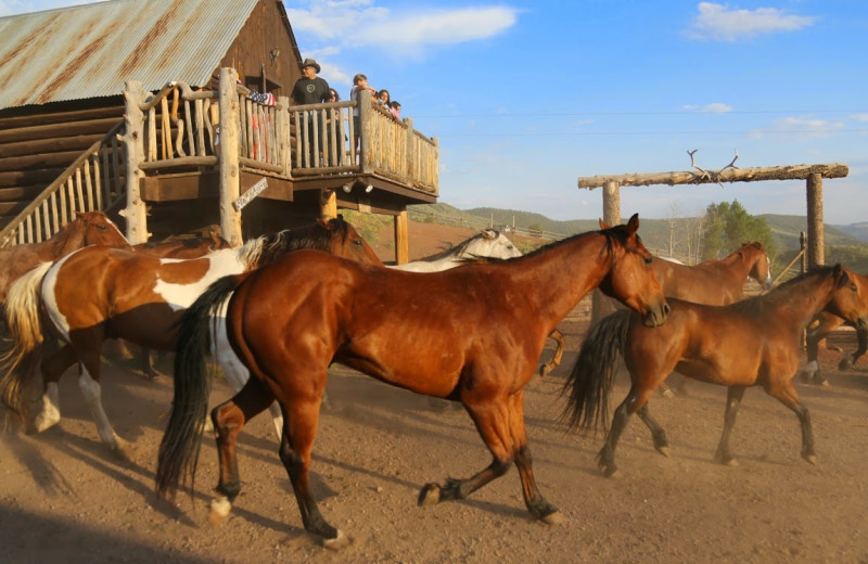 Horses at Black Mountain Ranch.