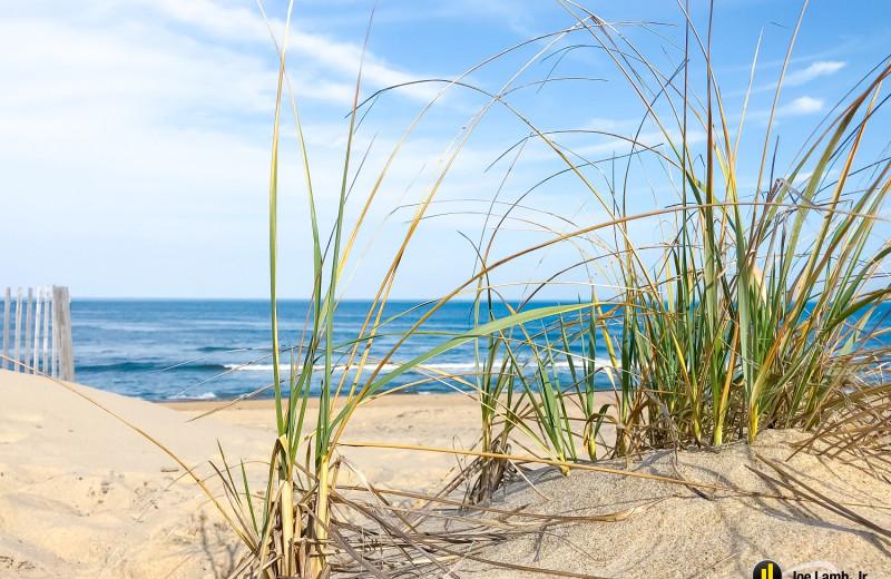 Dune Grass blowing in the Atlantic breeze.