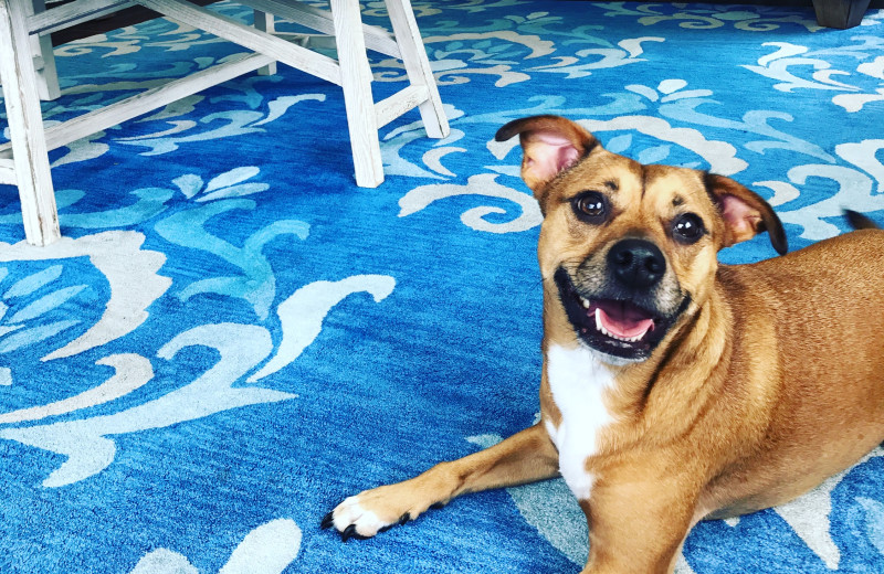 Pets welcome at Anna Maria Vacations.