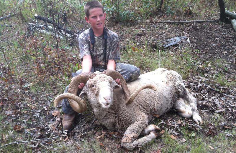 Baribroussa Ram hunting at Caryonah Hunting Lodge.