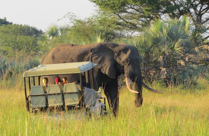 Eco drive at Tembe Elephant Park.