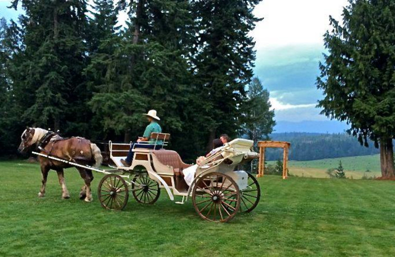 Carriage rides at Western Pleasure Guest Ranch.