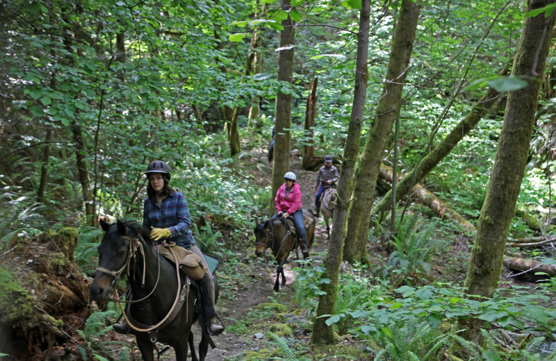 Horseback riding through forest at Marble Mountain Guest Ranch.
