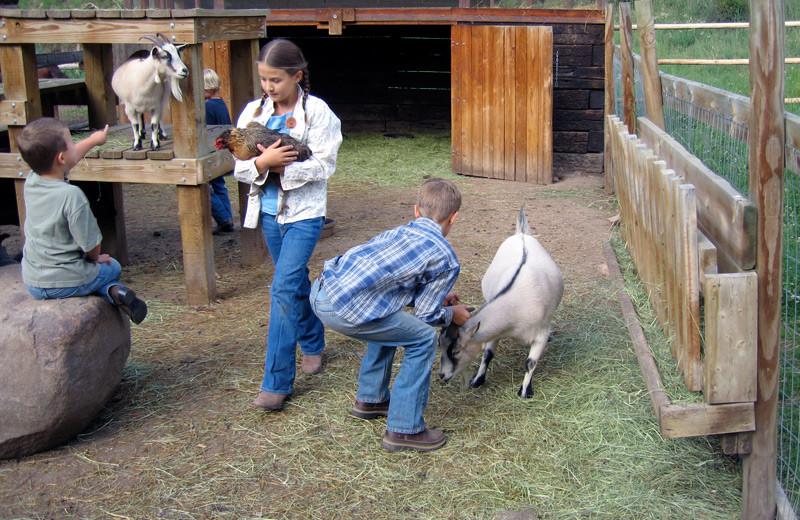 Ranch animals at Tumbling River Ranch.
