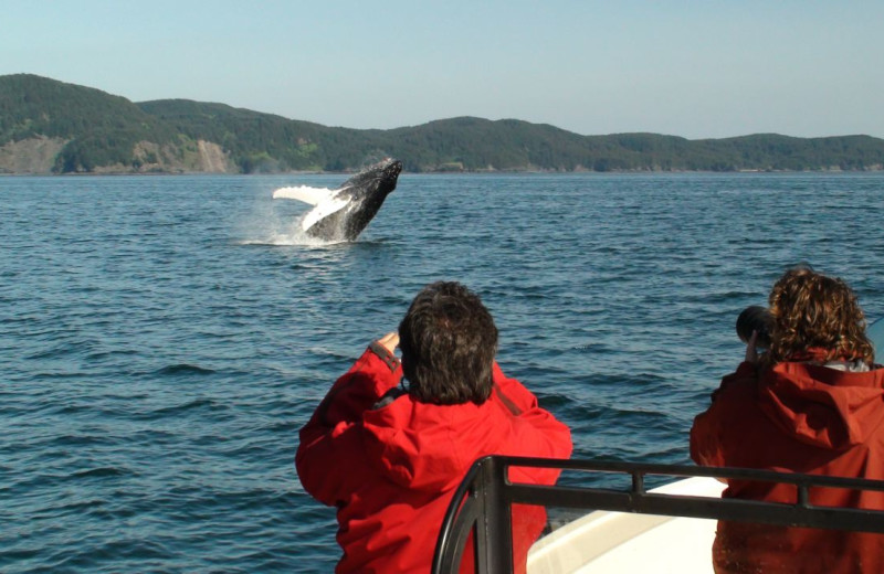 Whale watching at Afognak Wilderness Lodge.