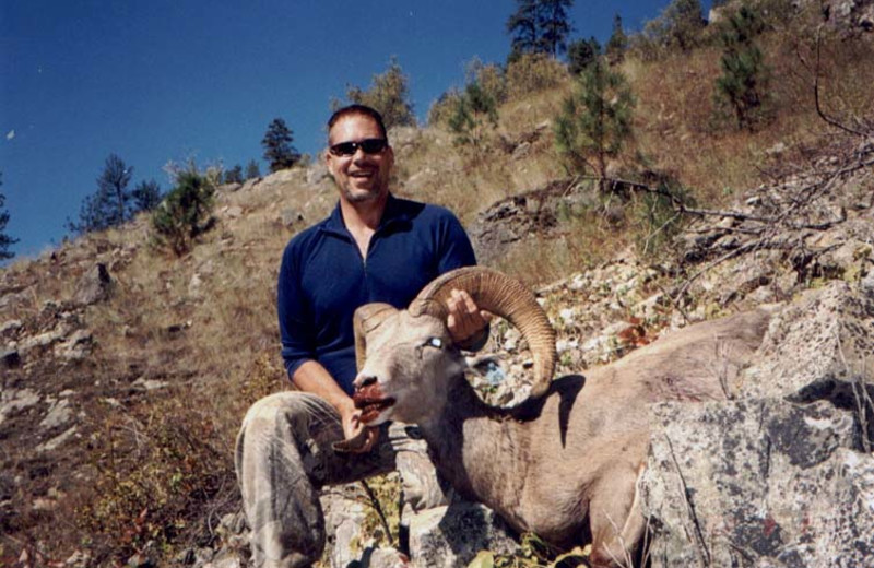 Big horn sheep hunting at Silver Spur Outfitters.