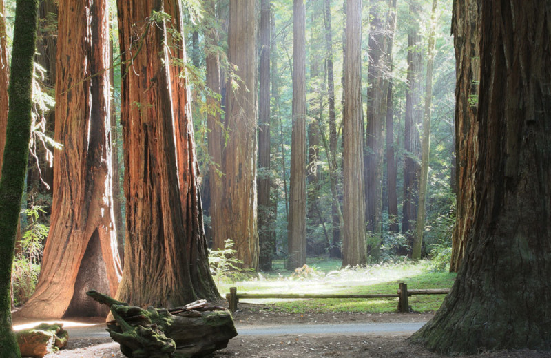 Redwood forest near West Sonoma Inn and Spa.