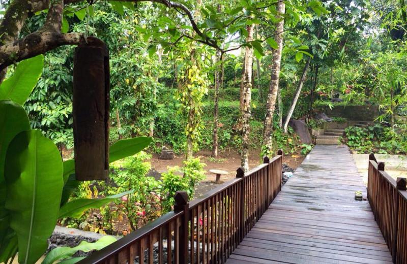 Grounds at Ubud Sari Health Resort.