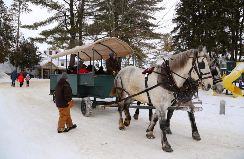 Sleigh ride at Bayview Wildwood Resort.