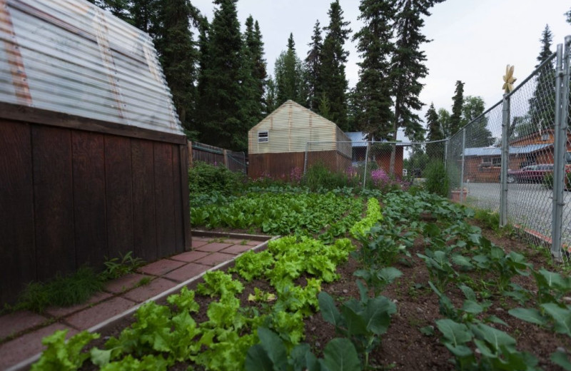 Garden at Alaskan Fishing Adventures.