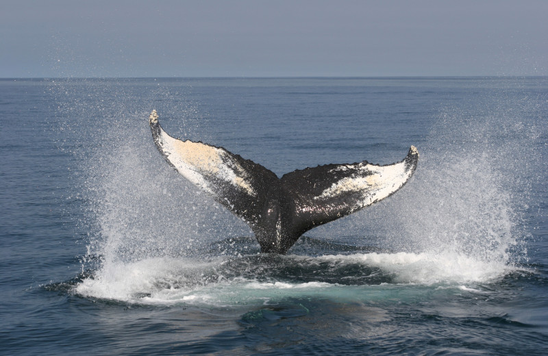Whale watching at Gold Key Resorts.