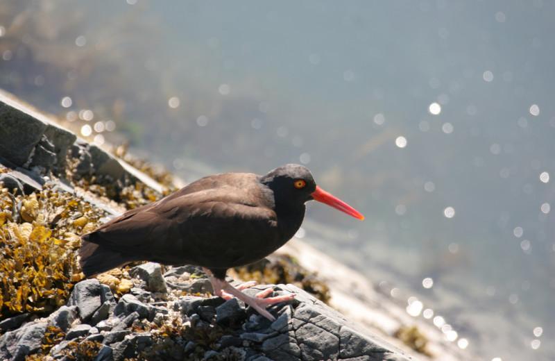 Bird at Kenai Fjords Glacier Lodge.