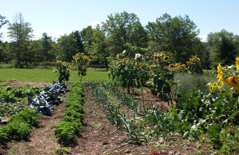 Garden at Lukan's Farm Resort