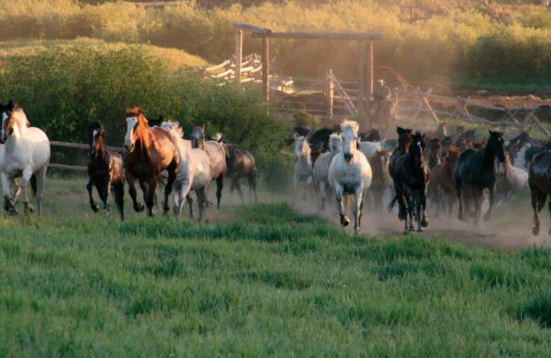 Horses at Paradise Guest Ranch.