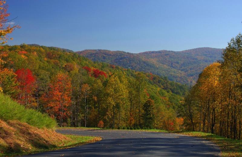 Fall foliage at Foscoe Rentals.