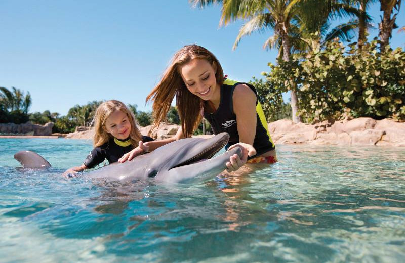 Swim with dolphins near Westgate Town Center.