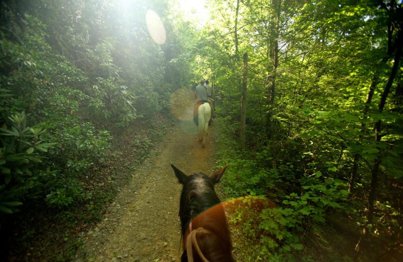 Horseback riding at Jackson Mountain Homes.