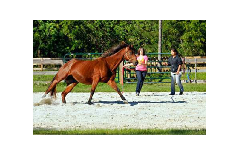 Equestrian stables at Southern Palm Bed & Breakfast.