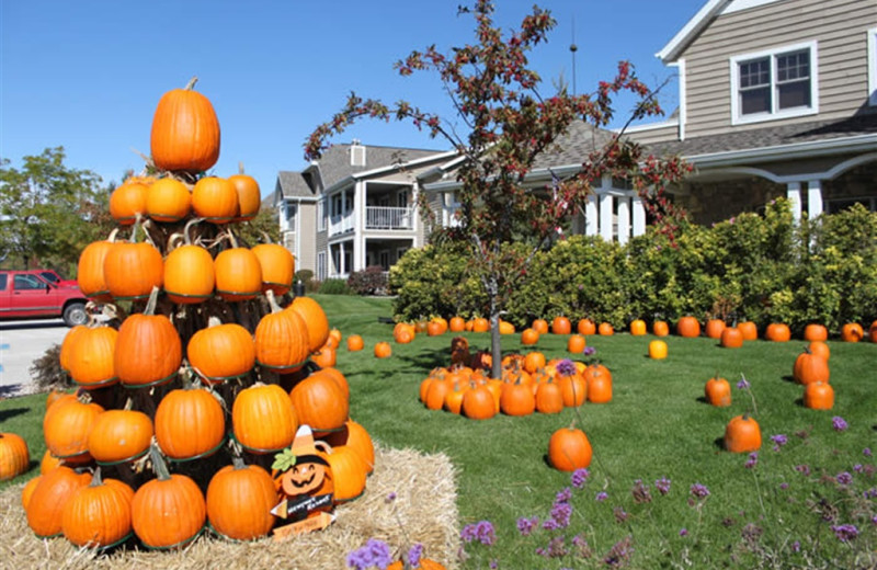 Pumpkin patch at Newport Resort.