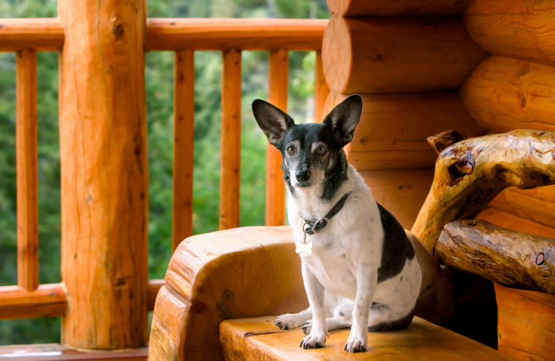 Pets welcome at Lake Forest Luxury Log Cabins.