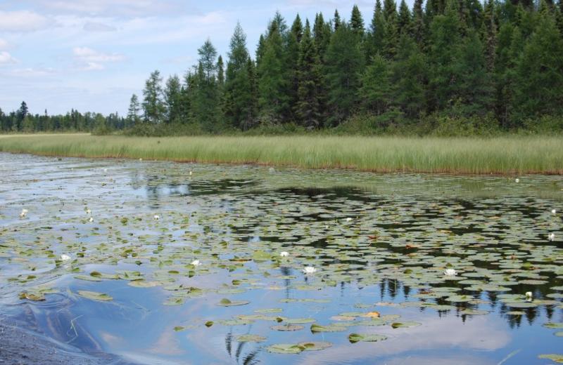 The Lake at Temple Bay Lodge