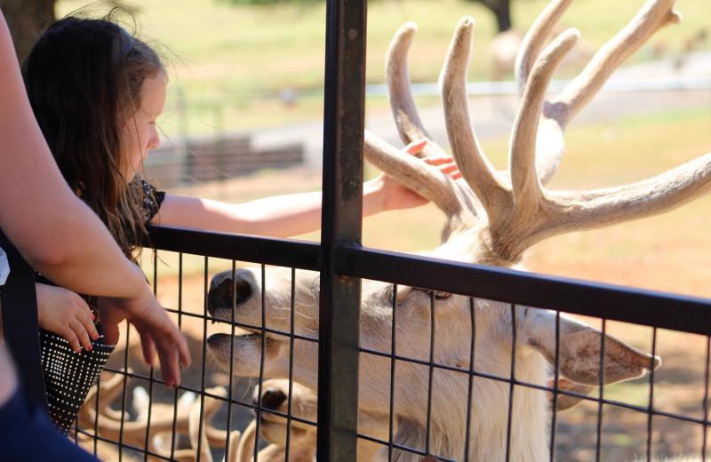 Feeding deer at The Exotic Resort Zoo.